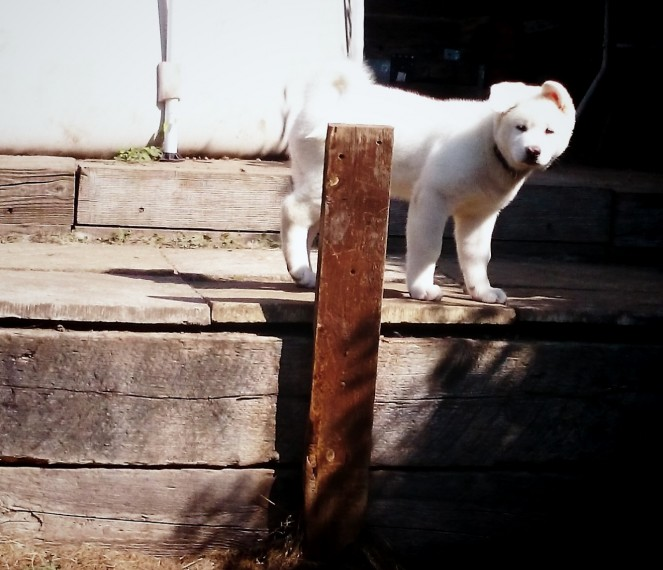 Akta Puppy Contact (781)x 519×9678
